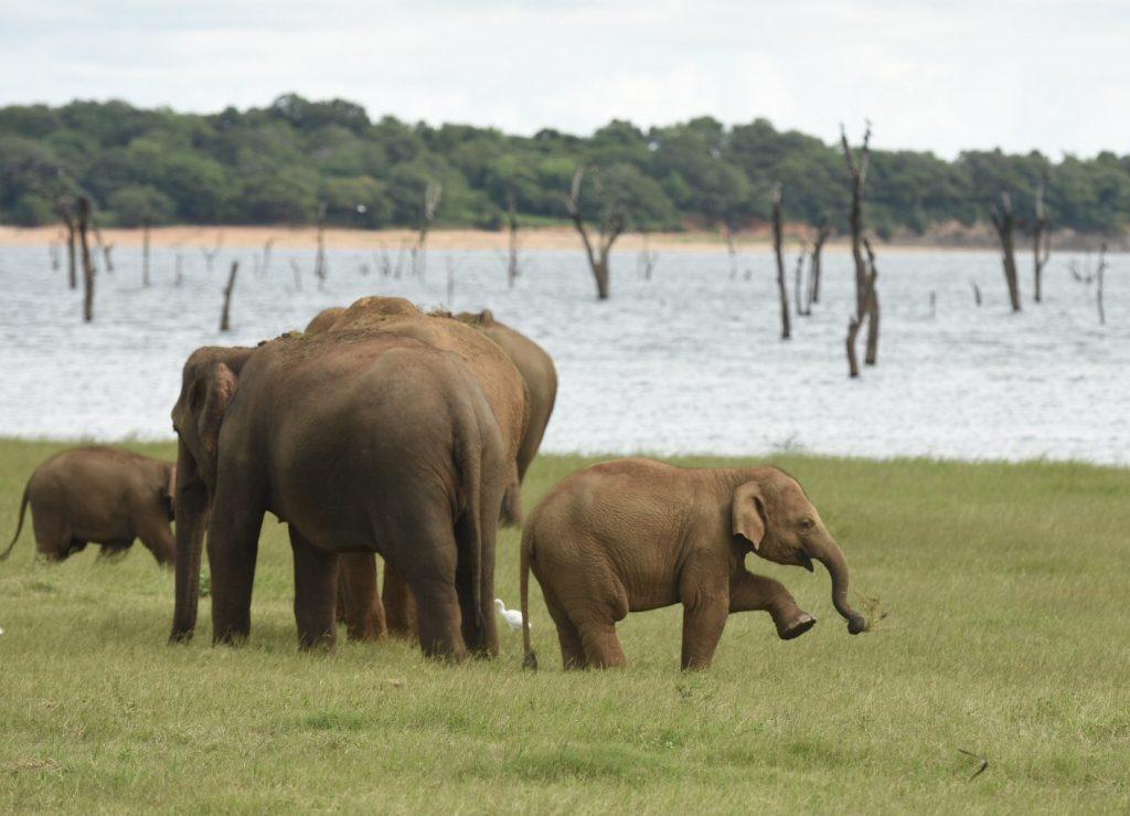 Elefantenbaby imitiert die Erwachsenen