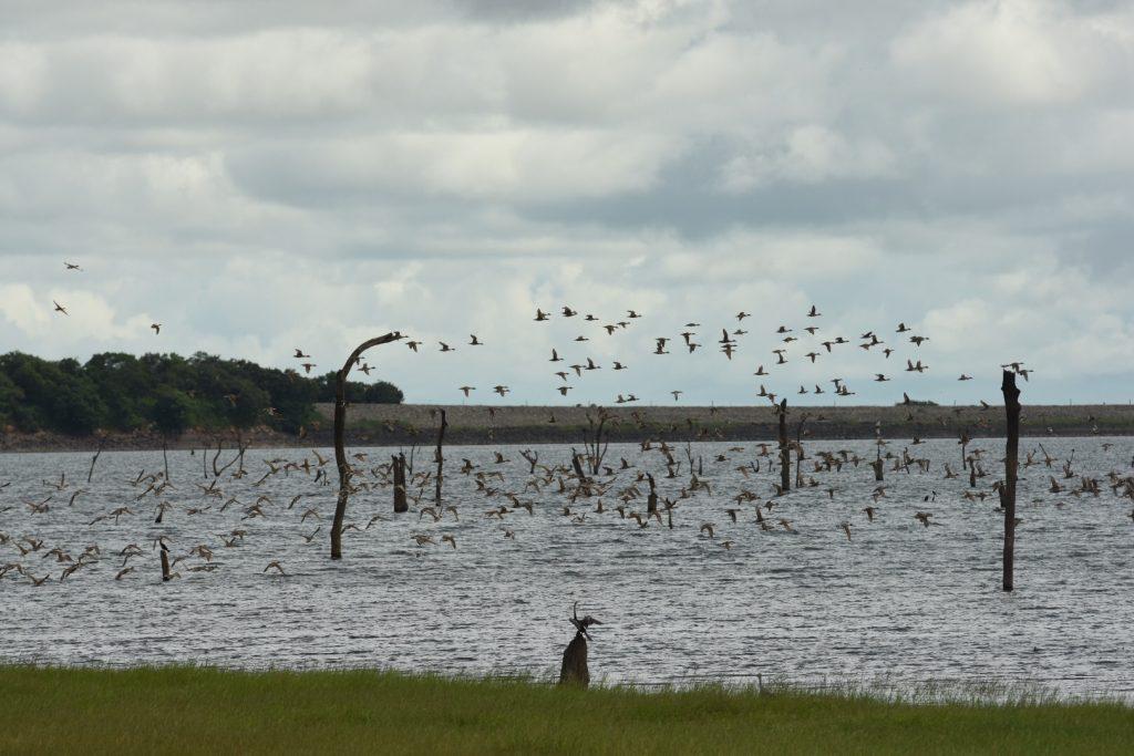 Vögel am Kaudulla Stausee