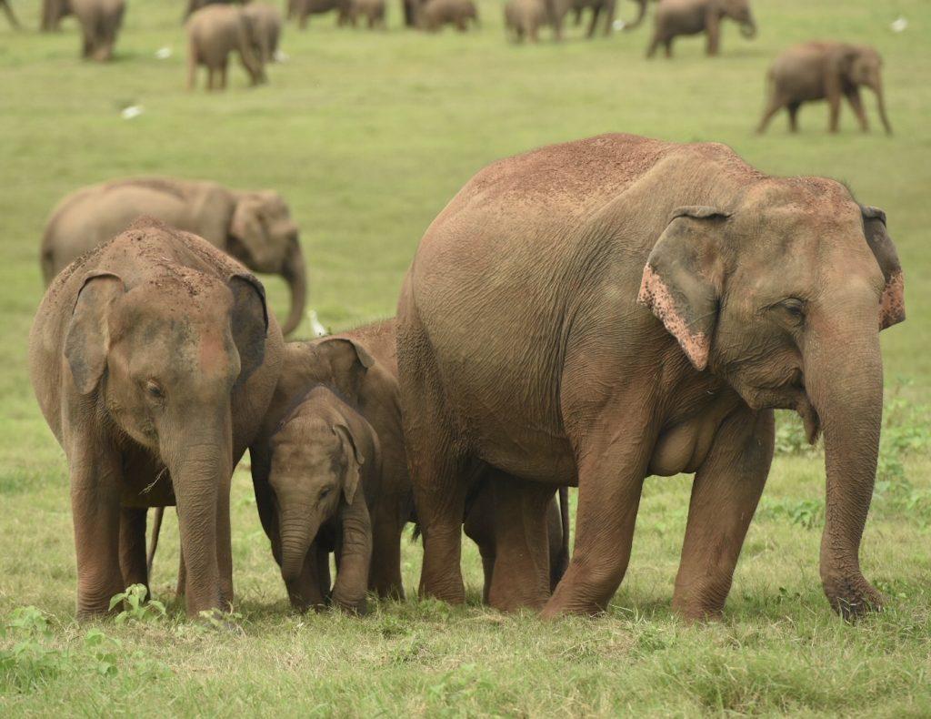 Eine Elefantenfamilie mit einem wenige Wochen alten Kalb