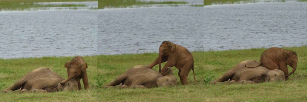 Elefantenbaby triezt Geschwisterchen
