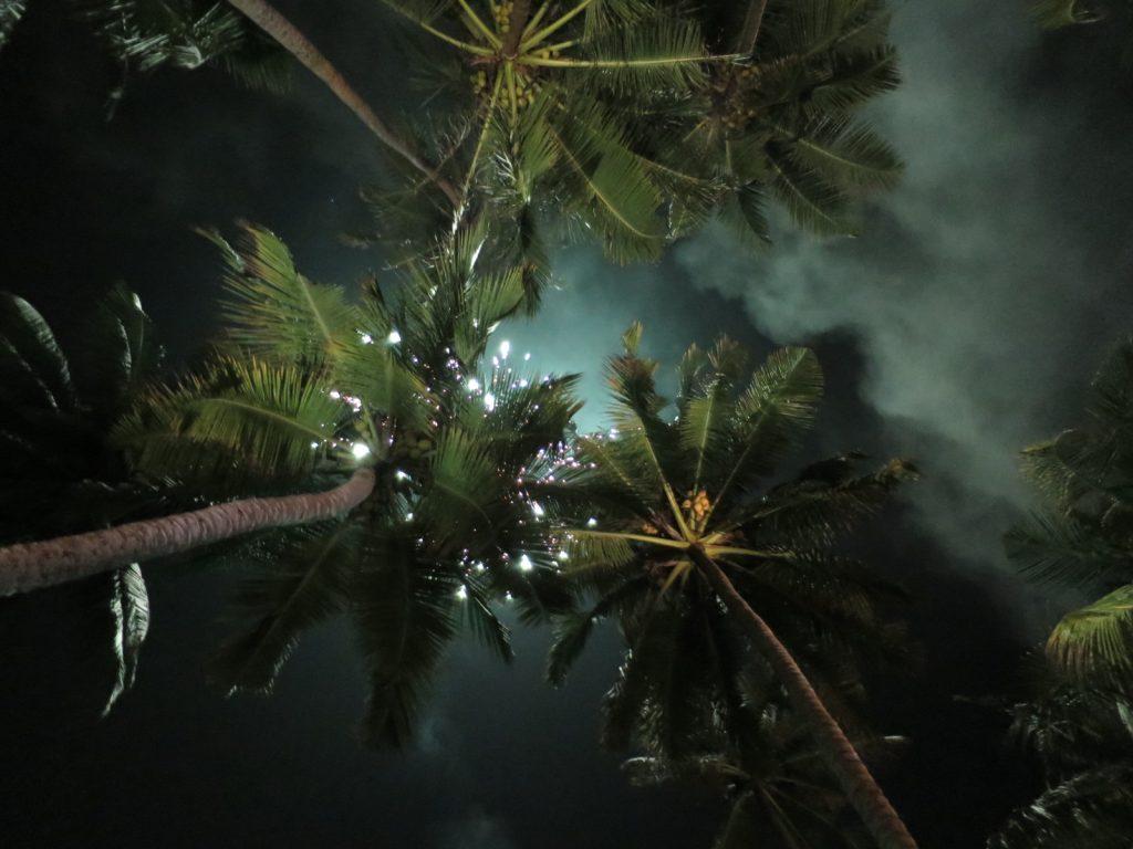 Palmen unter Feuerwerk