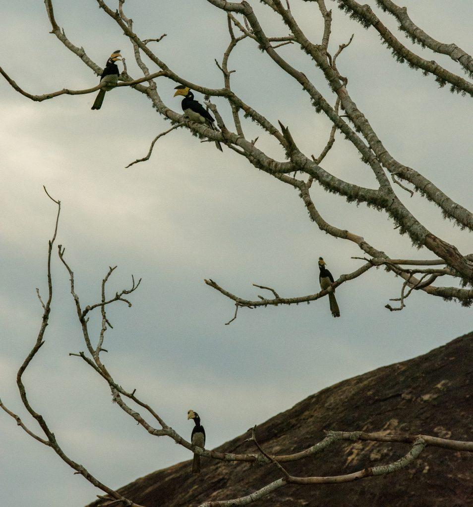 Eine Gruppe Hornbills sammelt sich in der Dämmerung rund um das Wasserloch