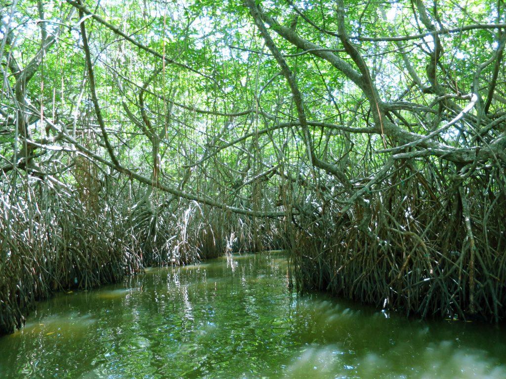 Das schützende Dach der Mangroven bildet einen natürlichen Tunnel für die Boote