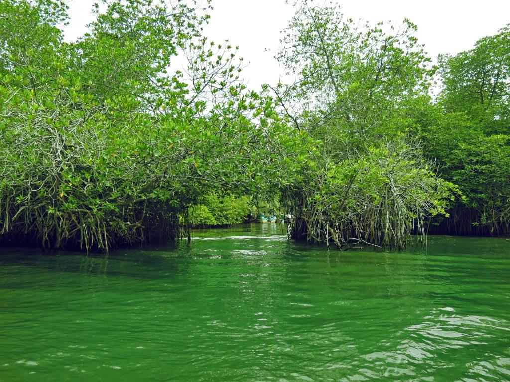 Ausblick auf die geheimnisvollen Tunnels der Mangroven von Balapitiya