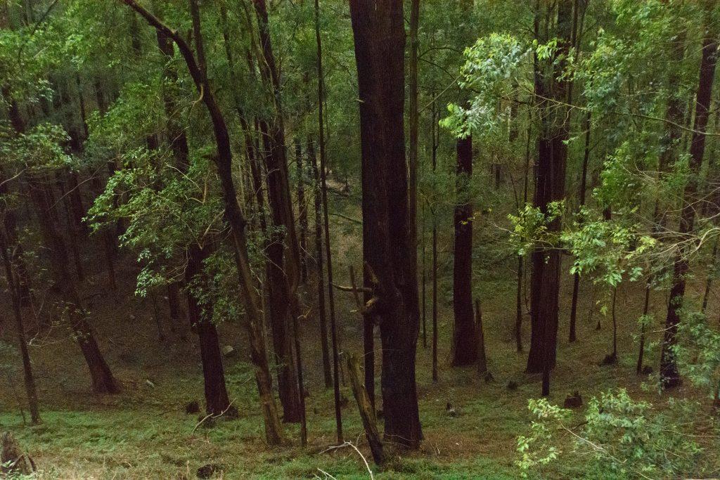 Die düsteren Wälder im Hochland wirken fast schon unheimlich
