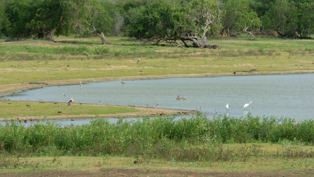 Die Gesamtansicht des Wasserlochs mit ein paar Vögeln im Vordergrund.