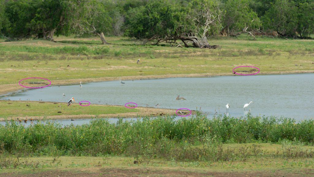 Auf den ersten Blick verschwimmen die Tiere mit dem Hintergrund.