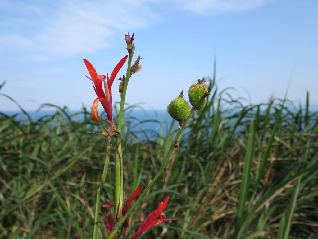 Kleinere Blüten am Wegesrand