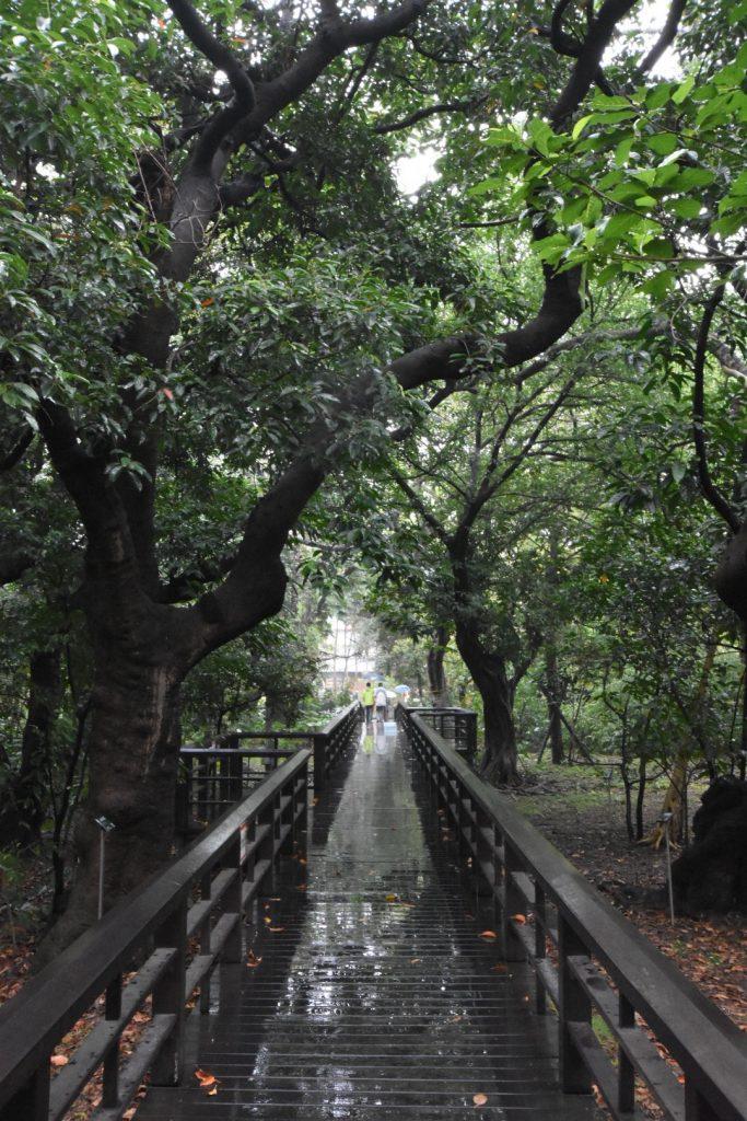 Ansicht aus dem botanischen Garten von Taipei