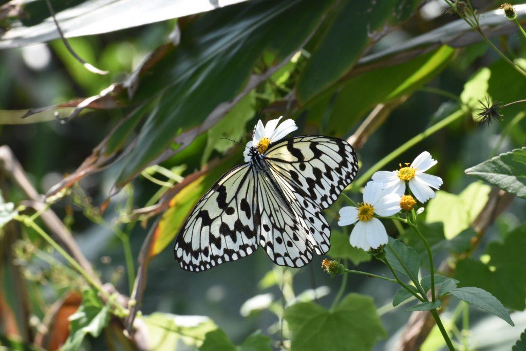 Die Schmetterlinge fallen hier etwas größer aus als gewohnt